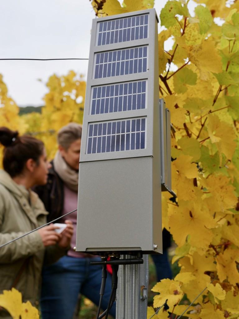 Die Sensorplattformen ermitteln alle für den Weinbau relevanten Daten. (Bild: Frank Feil)